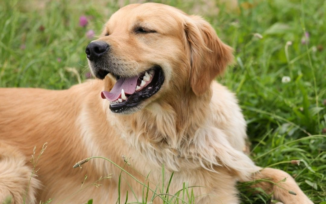 Signs Your Pet Might Have Seasonal Allergies